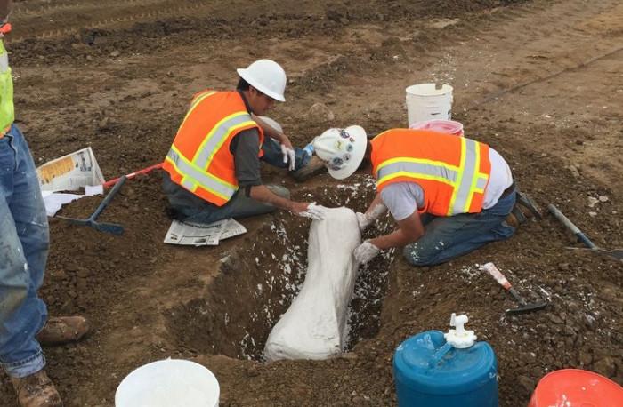 Các công nhân đang khai quật khúc xương voi ma mút.