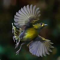Câu chuyện của những loài chim
