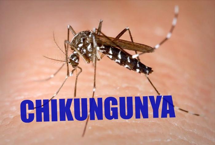 WHO ghi nhận Chikungunya đã xuất hiện tại hơn 60 quốc gia.