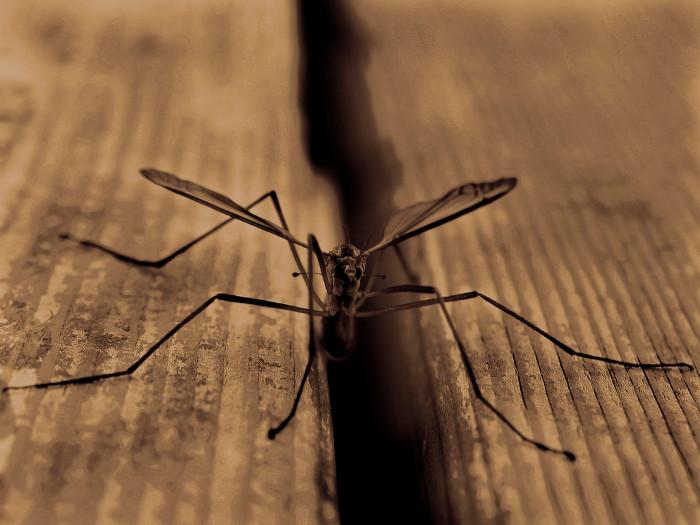 Sốt rét sinh ra bởi ký sinh trùng plasmodium do muỗi truyền, tấn công hàng triệu người mỗi năm.