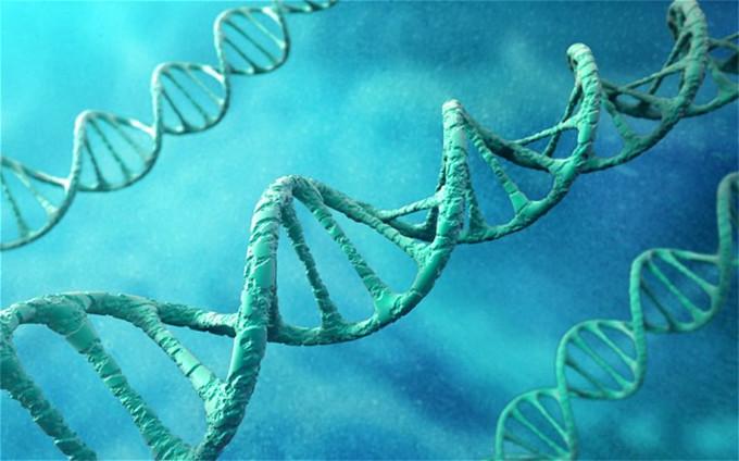 Các biến thể gene liên quan tới trí thông minh cũng sẽ liên quan tới sức khỏe tốt.