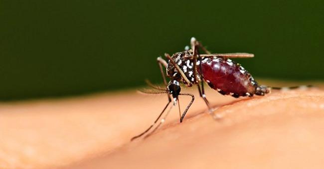 Tiêu diệt muỗi