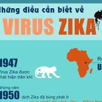 Virus gây teo não bào thai nguy hiểm thế nào?
