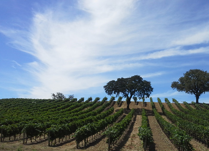 Nho được trồng ở đây đậm đà, thơm ngon hơn ở nhiều vùng khác vì thế trong suốt nhiều thế kỷ kinh tế ở đây rất phát triển nhờ nghề nấu rượu nho truyền thống