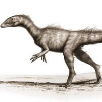 Video: Các nhà khoa học vừa tìm ra một loài khủng long mới