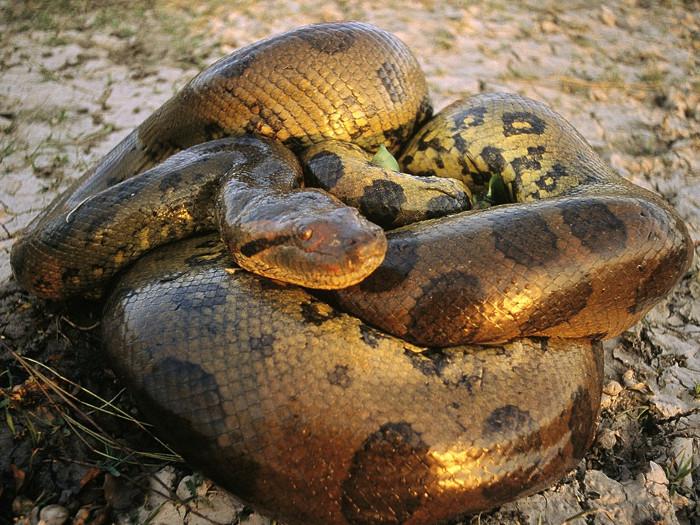 Đây là một trong những loài sinh vật đáng sợ trên Trái đất.