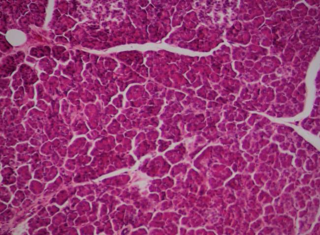 Lá gan nhân tạo giống như thật đang được nuôi cấy trong phòng thí nghiệm, sắp sửa được ra mắt.