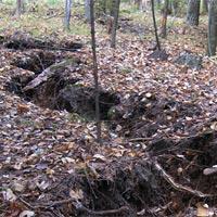 Khe nứt bí ẩn dài 110 m trong khu rừng Mỹ