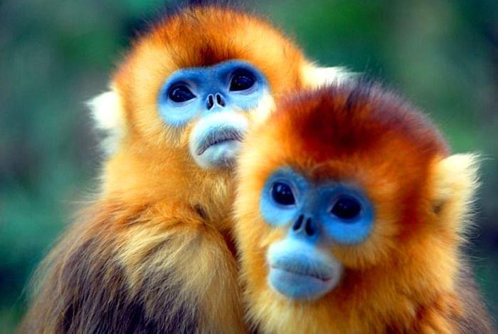 Khỉ là loài động vật thông minh