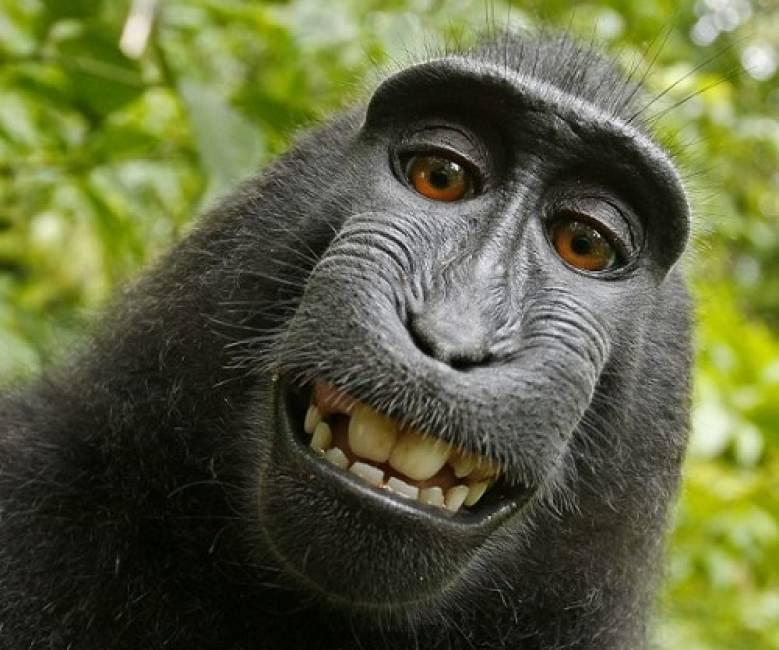 Khỉ có thể ghi nhớ nhận dạng khuôn mặt