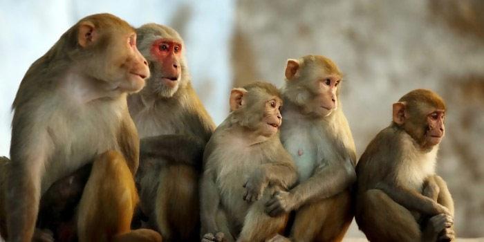 Loài khỉ