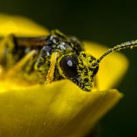 Sắp xuất hiện loại pin làm từ phấn hoa