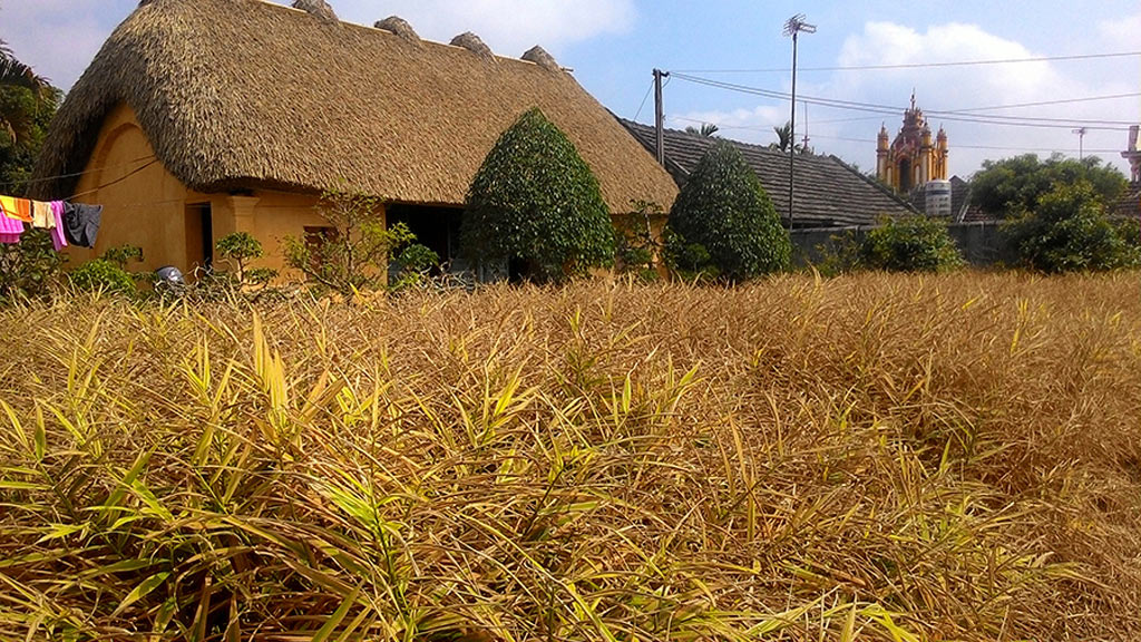 Đây là ngôi nhà mái rạ xây dựng từ năm 1975 của gia đình ông Trần Công Tâm, 70 tuổi, tại tổ 4, thị trấn Yên Định, Hải Hậu.