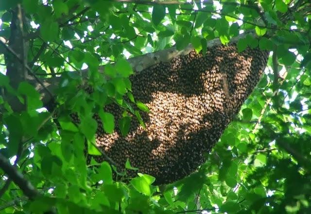 Không nên trêu, chọc tổ ong