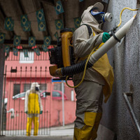 Hawaii ban bố tình trạng khẩn cấp vì dịch bệnh do muỗi