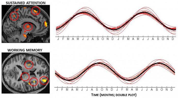 Ảnh chụp hoạt động các vùng của não các tình nguyện viên có sự thay đổi theo các mùa trong một năm.