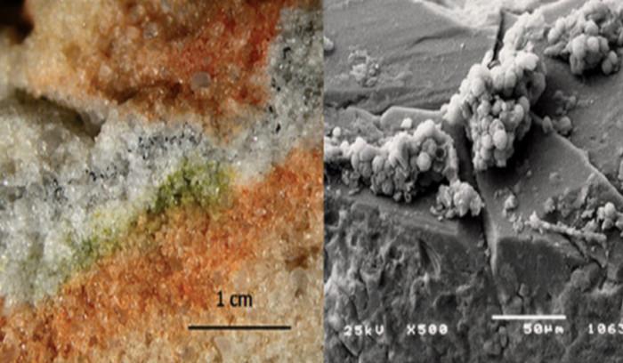 Nấm thu thập từ Nam Cực đem lên vũ trụ này có độ rộng 1,4cm, cao hơn 200 nanomet.