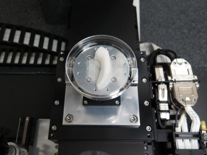 Máy in này không thể in ra mạch máu, nên các mô tạo thành sẽ có kích thước chỉ khoảng 200 micromet.