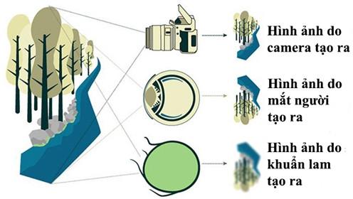 Những vi khuẩn này hoàn toàn có đầy đủ những tính chất của một vật thể quang học.