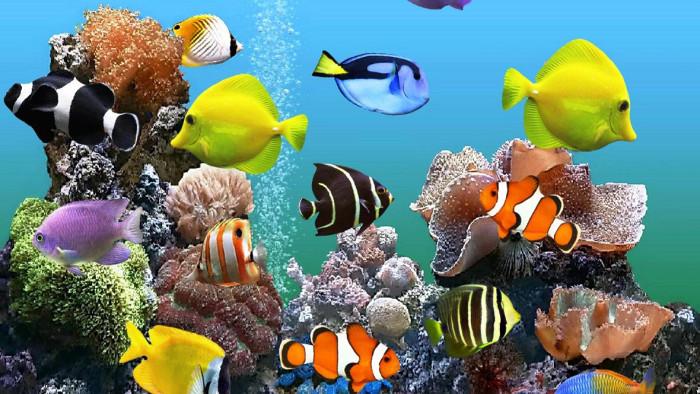 Nhiều loại cá cảnh khác nhau được lai tạo chỉ nhằm thỏa mãn mục đích của con người.