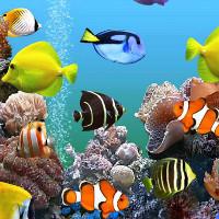 Những sự thật bất ngờ về loài cá cảnh