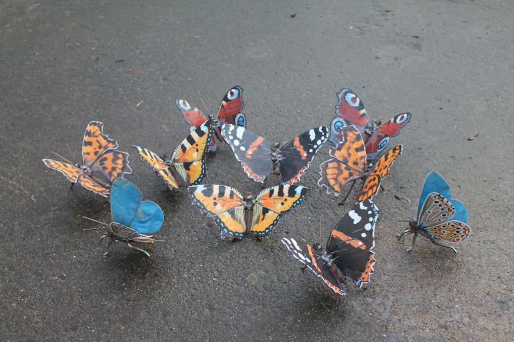 Bọ cánh cứngaMột đàn bướm rực rỡ sắc màu tuyệt đẹp