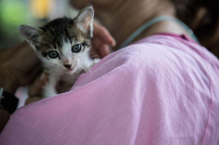 Một chú mèo con bị bệnh được nâng niu bởi một tình nguyện viên.