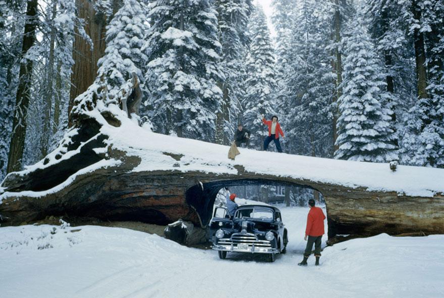 Rừng quốc gia Sequoia