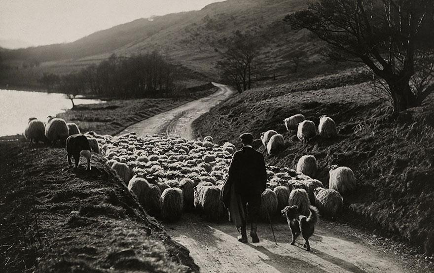 Người đàn ông chăn cừu