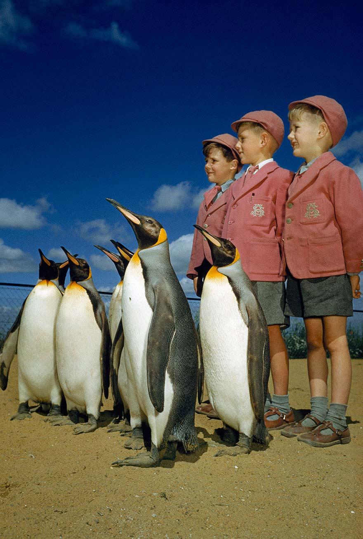 Chim cánh cụt và ba cậu bé