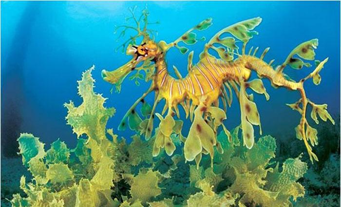 Rồng biển
