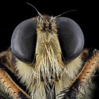 Phát triển UAV từ cách định vị của ong vò vẽ