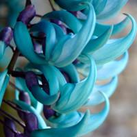 10 loài hoa hiếm và đẹp nhất thế giới