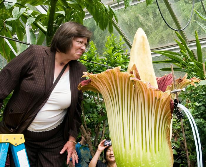 Hoa này còn gọi là hoa xác thối.