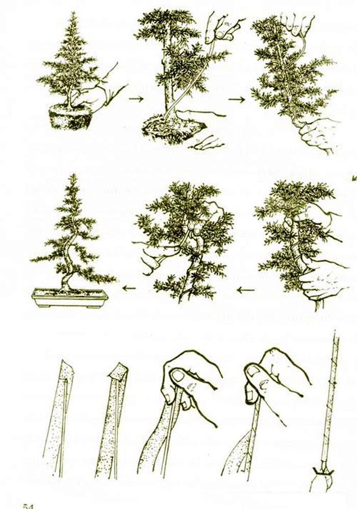 Phương pháp uốn cành cho cây cảnh