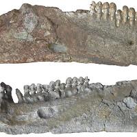 Sinh vật mệnh danh xấu nhất thế giới trước thời khủng long