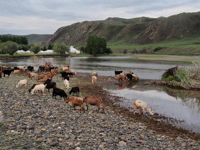 Cuộc sống du mục của người bản địa ven sông Orkhon