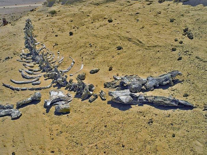 Unesco đã công nhận Thung lũng cá voi của Ai Cập là Di sản thiên nhiên thế giới năm 2005.