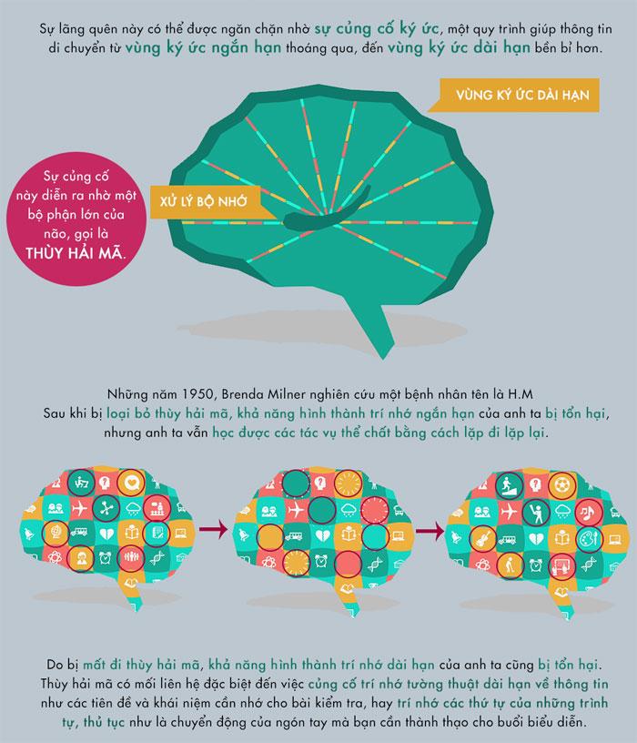 Thùy hải mã có mối liên hệ đặc biệt đến việc củng cố trí nhớ tường thuật dài hạn về thông tin.