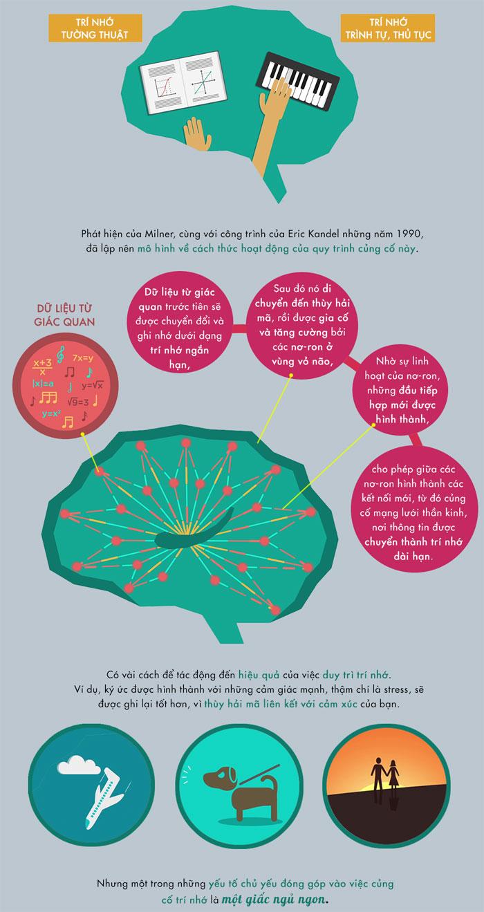 Giấc ngủ ngon đóng vai trò quan trọng trong việc củng cố trí nhớ.