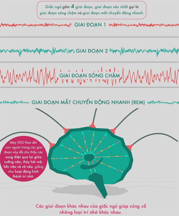 Các giai đoạn khác nhau của giấc ngủ giúp củng cố những loại trí nhớ khác nhau.