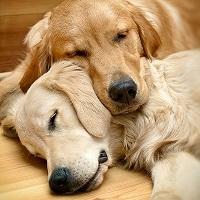 Giải mã giấc mơ của loài chó