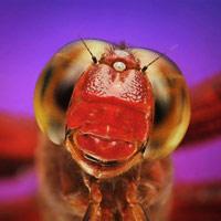 Cận cảnh vẻ đẹp kỳ lạ của các loài động vật tí hon