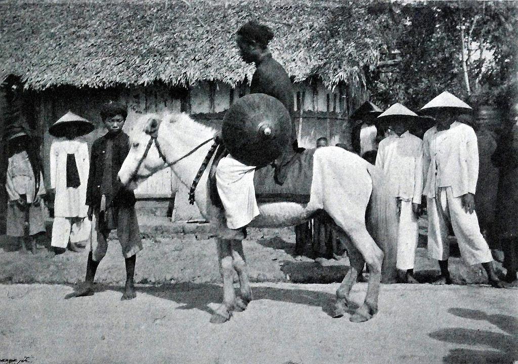 Ngựa là phương tiện di chuyển và chuyên chở của một số người.
