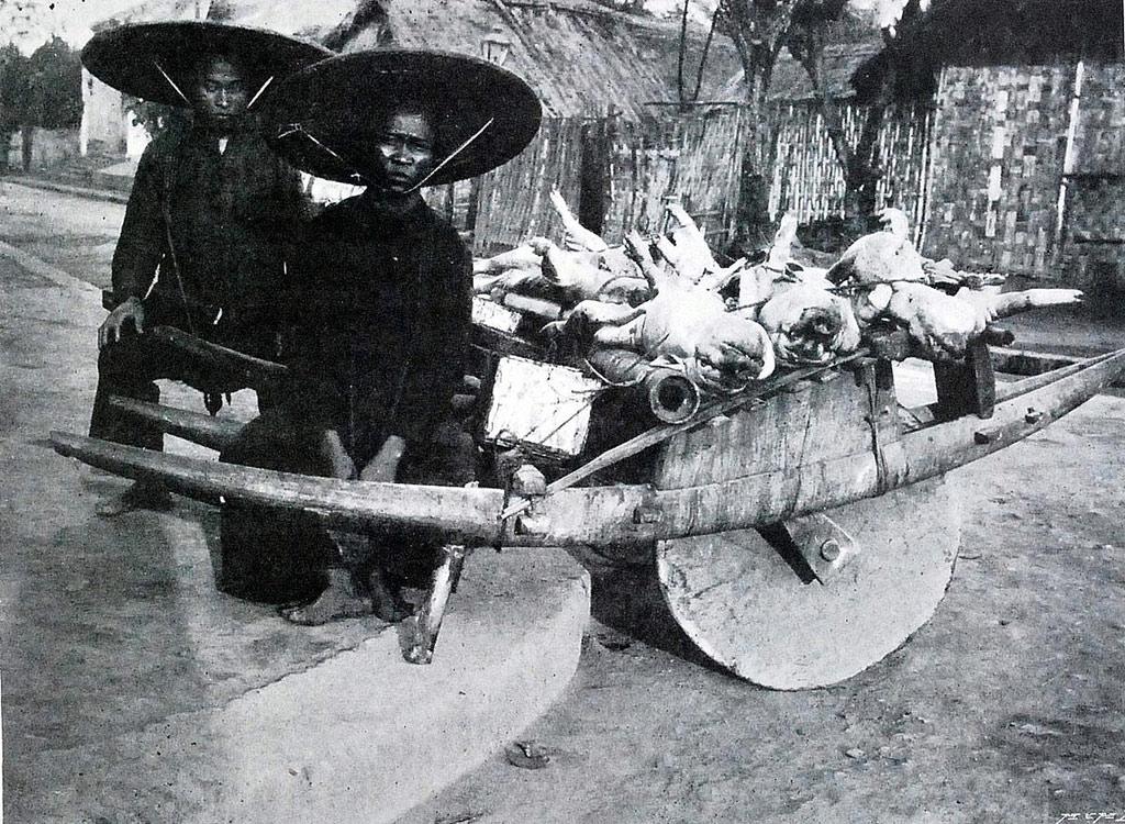 Xe cút kít còn dùng chở lợn ra chợ bán.