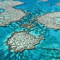 Các rạn san hô sẽ chết hết nếu tình trạng axit hoá nước biển không giảm