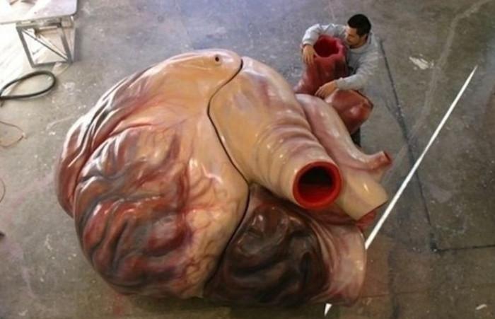 """3. Trái tim của một con cá voi xanh lớn đến mức mà một người trưởng thành có thể """"bơi"""" qua các động mạch của nó."""