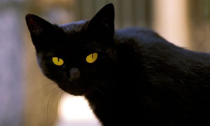 Mèo được cho là loài vật mang điện tích dương