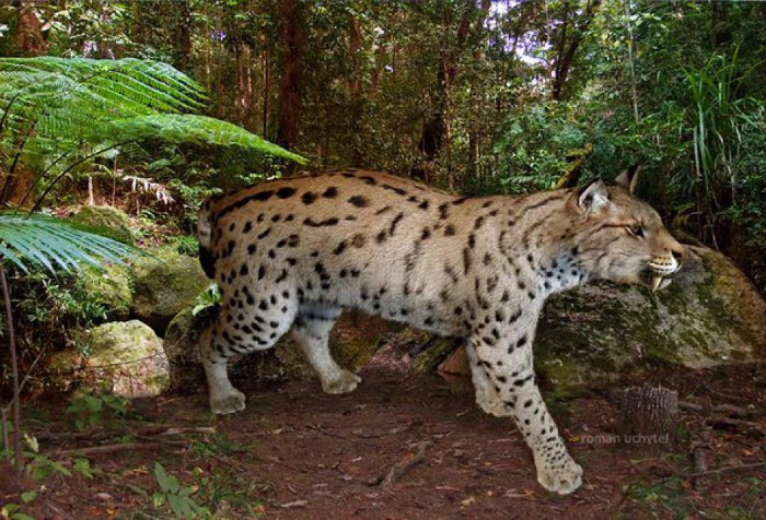 Loài mèo Dinofelis phổ biến ở châu Âu, châu Á, châu Phi và Bắc Mỹ khoảng 1,2 đến 5 triệu năm trước đây.