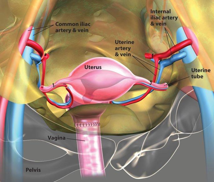 Kỹ thuật cấy ghép tử cung đã được thực hiện lần đầu tiên vào năm 2012 tại Thụy Điển với kết quả rất khả quan.
